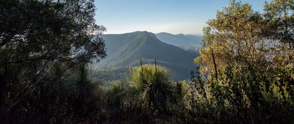Mount Mitchell Track