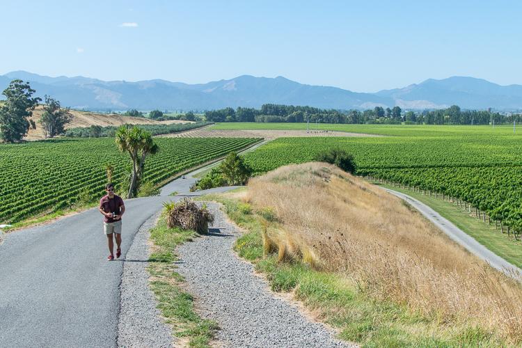 DIY Bike Tour Wineries Marlborough Renwick New Zealand - Trailing Rachel