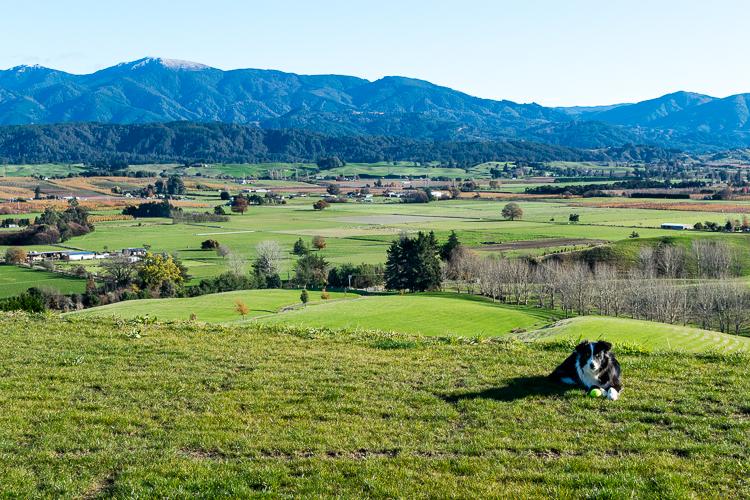 Housesitting New Zealand - Trailing Rachel
