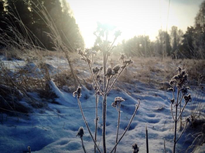 frost-vinter