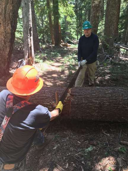 Two workers on either side of a log hold their hands on a crosscut saw.