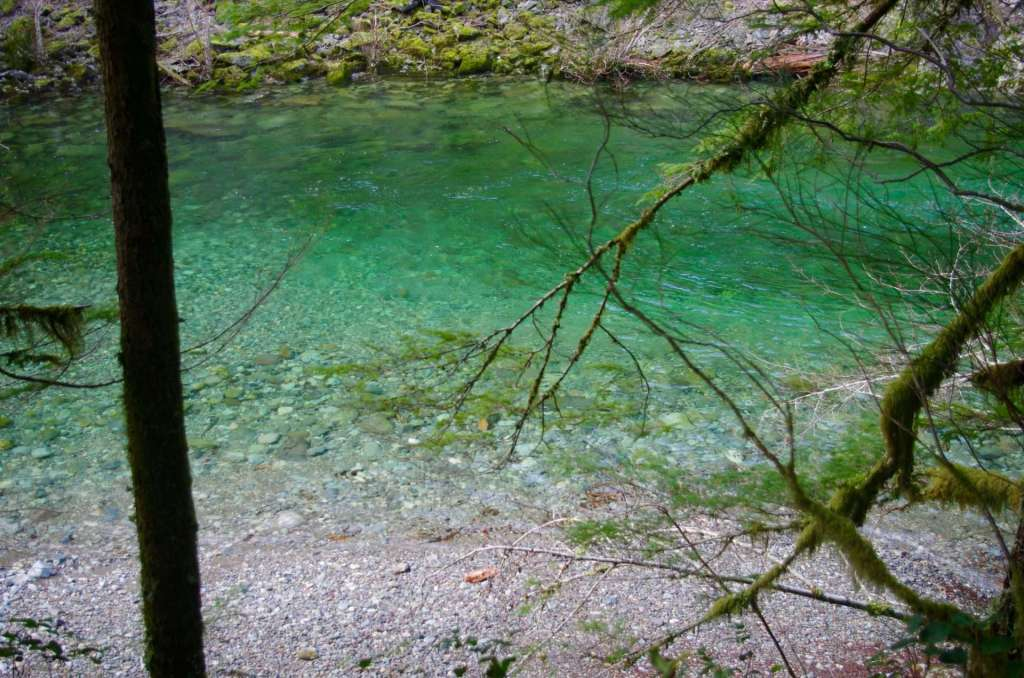 A view down through trees of a clear turquoise-colored stream.