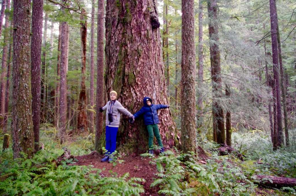 Two boys stand in front of a large Douglas fir tree.