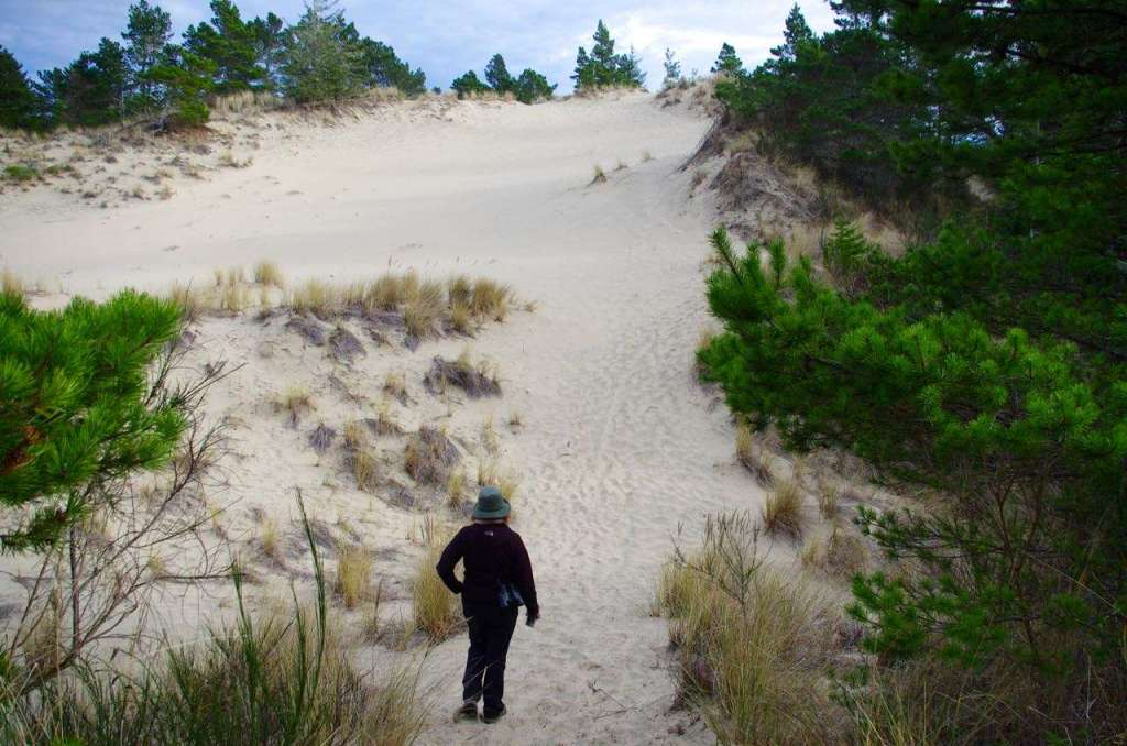 A hiker is about to ascend a sand dune partially colonized by grasses and pine trees.