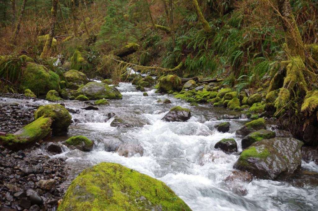 A stream tumbles down through mossy boulders below a fern-covered hillside.