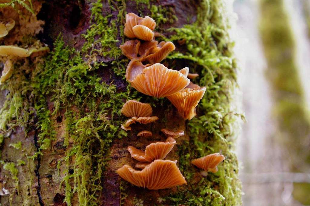 A stack of several orange mushrooms and green moss cover the bark of a dead tree.