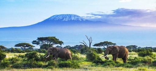 Safari en Tanzania a los pies del Monte Kilimanjaro