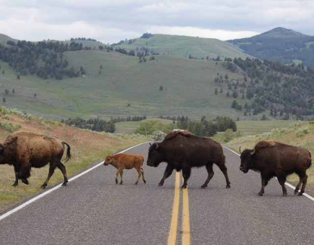 Lamar Valley – Yellowstone