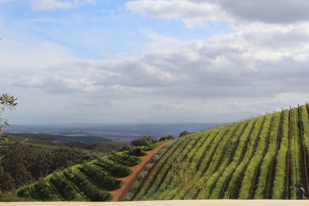 thelema mountain vineyards stellenbosch
