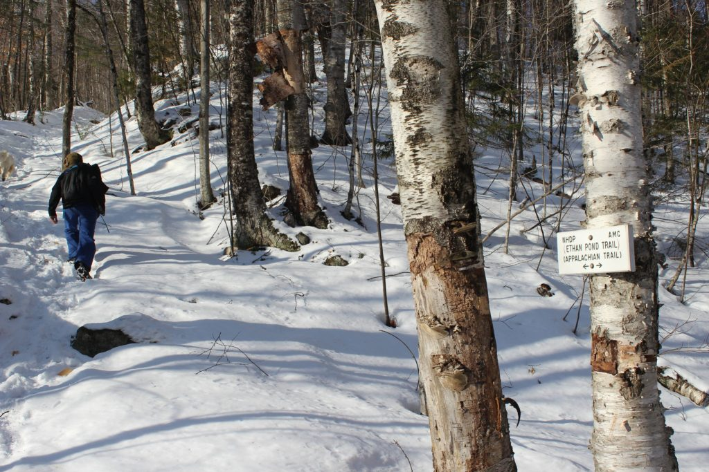 Mt. Willey Winter Hike | Trails Unblazed