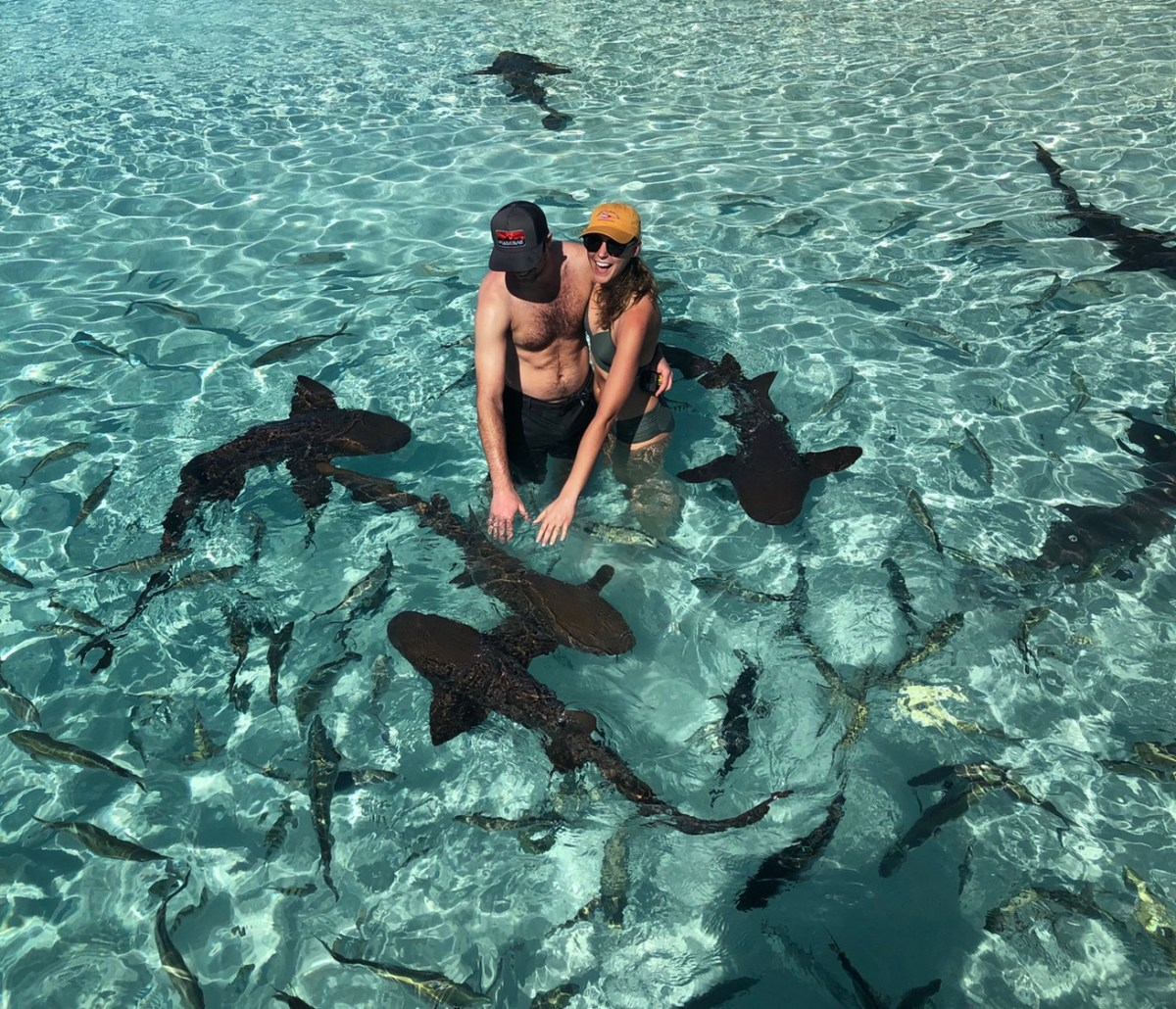 Swimming with Sharks at Compass Cay