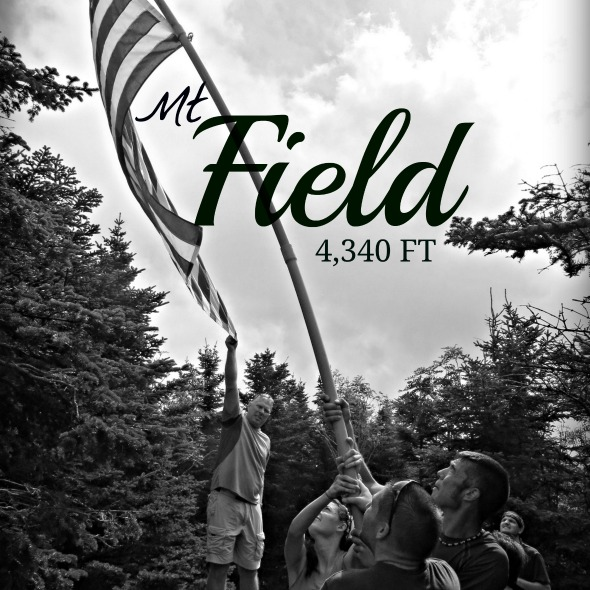 mt field