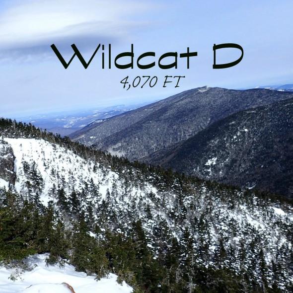 wildcat d