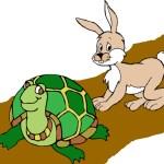 Truyện đọc cho bé: Rùa và Thỏ