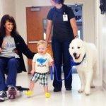 5 Lợi ích của việc sử dụng chó trị liệu khi bé tập đi