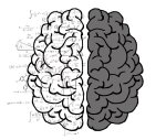Predict university results with cognitive tests