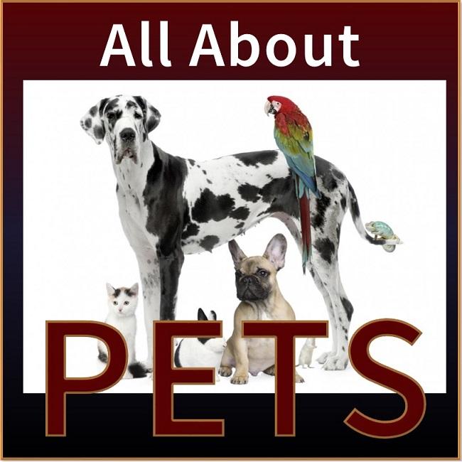 <center><h4>Managing Pet Risks</h4></center>