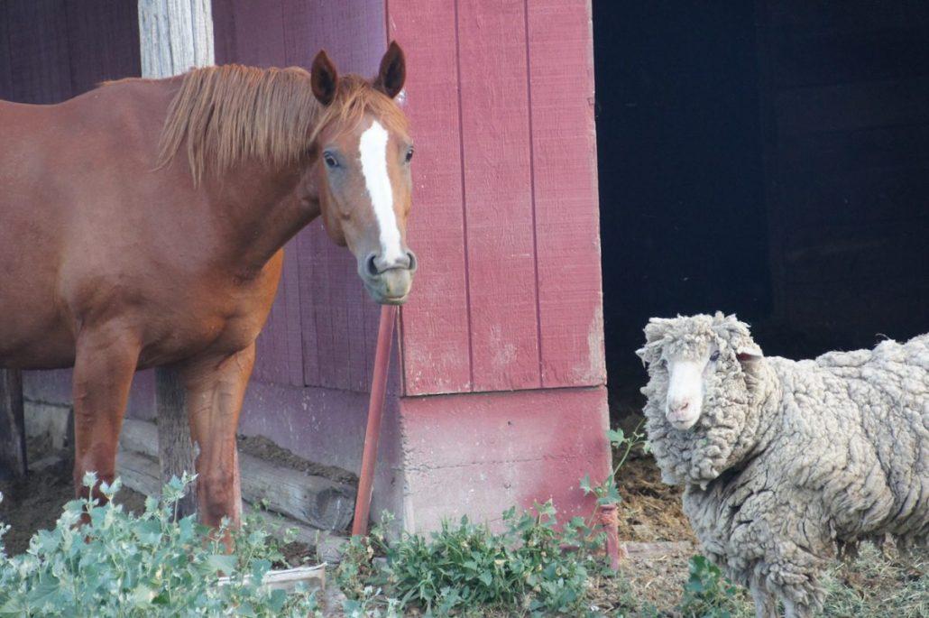 Two buddies on a farm.