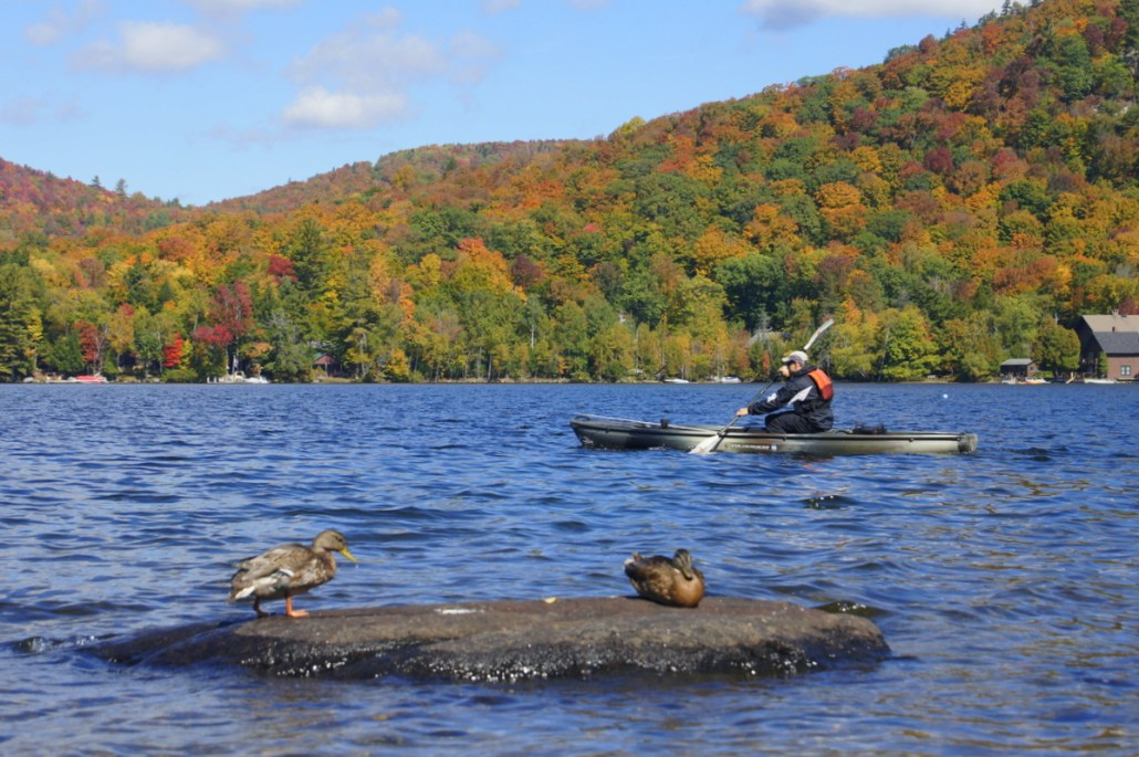 Ducks preen and watch a kayaker on Blue Mountain Lake.