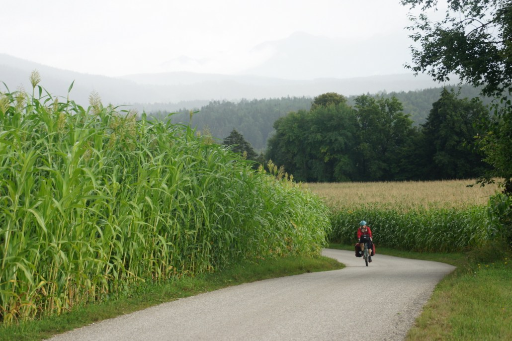 The hilly southern edge of Austria still had corn!