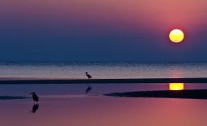 evening_bright_sunset_and_heron_bird-003