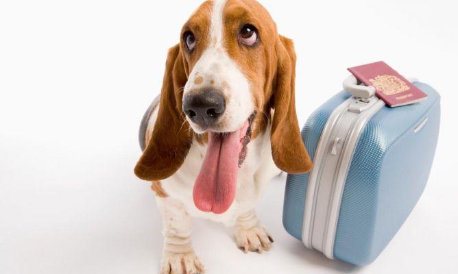 viajar-mascotas-vueling1
