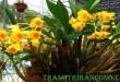 huong-dan-cach-trong-hoa-phong-lan-trong-chau-1