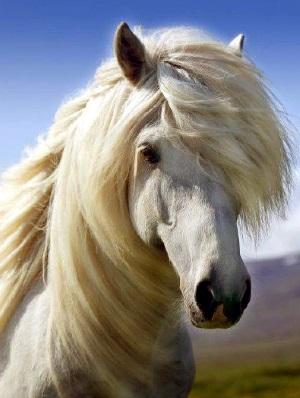 Risultati immagini per celtic animals horse