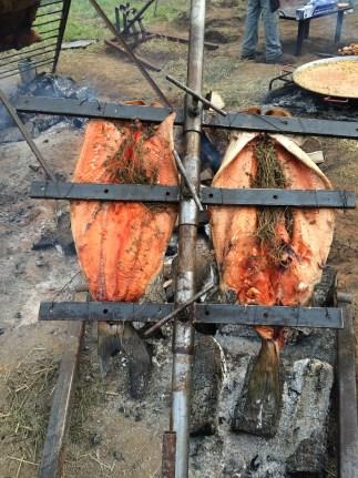 Fresh Local Salmon
