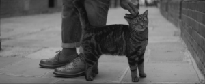 Man In Worn Leather Shoes Petting Tabby Cat In Brick Lane London