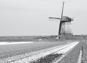 Dutch Translation Services and Dutch Transcription Services