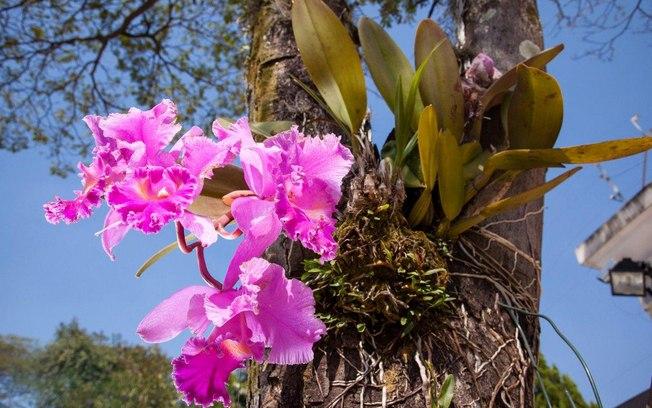 cuidar-de-orquideas-15