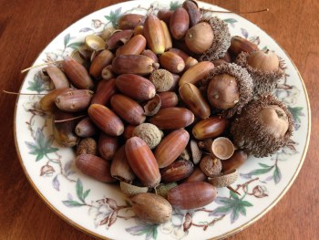 oak acorns, oak seeds, in a flowered bowl, eating traditional foods