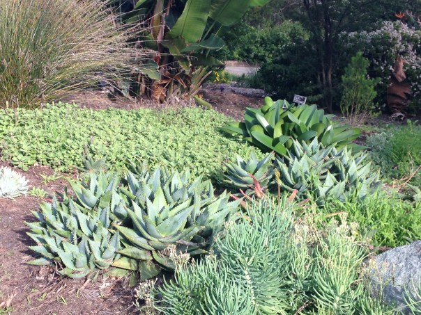 desert plants, succulent, photos, images, California, San Diego Botanic Gardens, USA