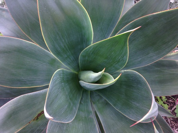Desert plant photo, succulent, photo, images, agave, sample, California, San Diego botanic garden, USA