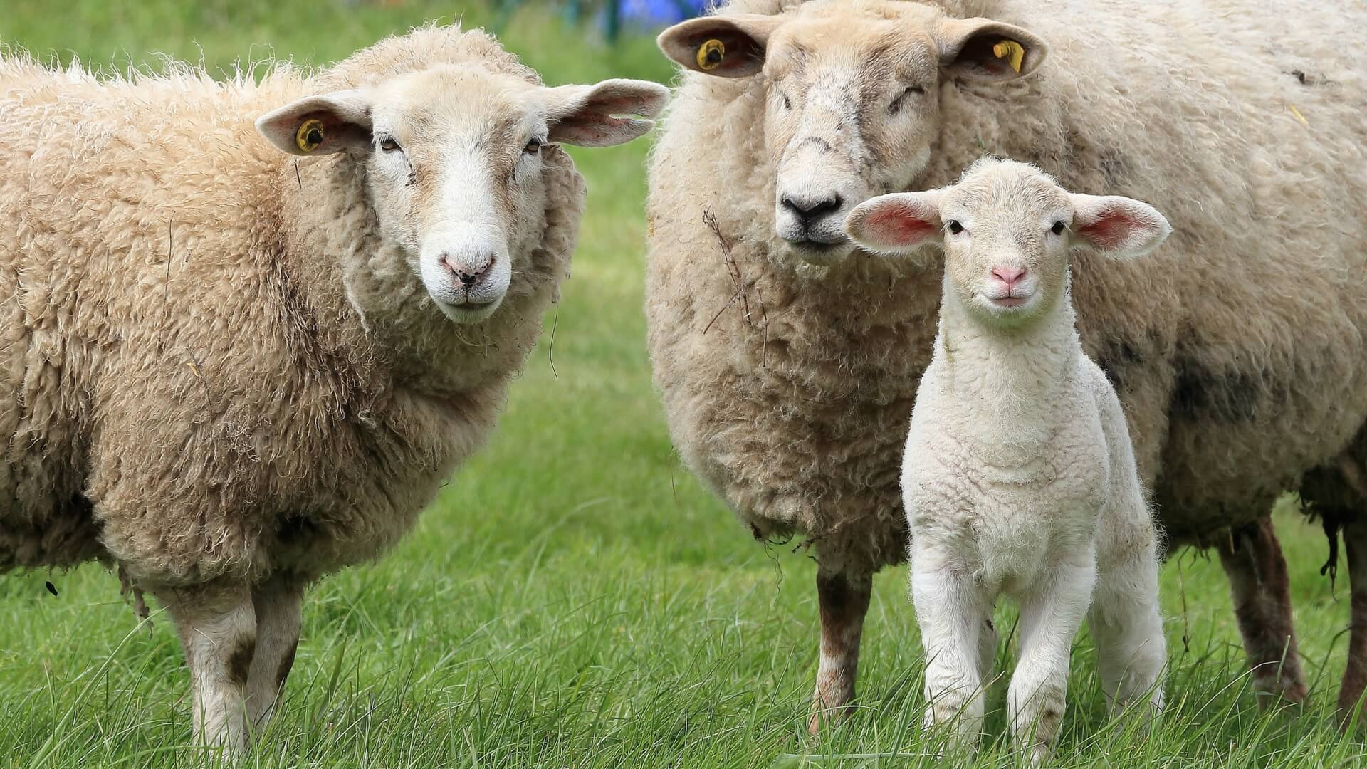 Parable Of The Lost Sheep And Lost Coin