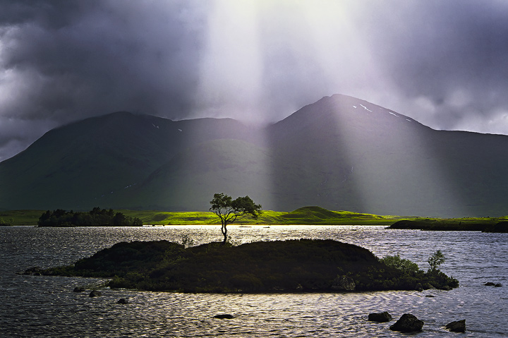 Tree on rannoch moor with a sunlight beam on it and mountains behind