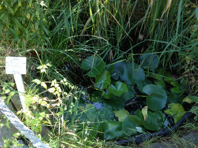 The pond, which even contains newts!