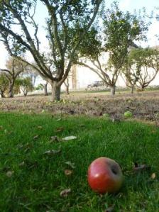 Apple Tree Pruning Workshop @ St Leonards Orchard
