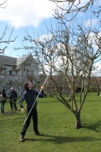 Apple Tree Pruning @ St Leonards Community Orchard