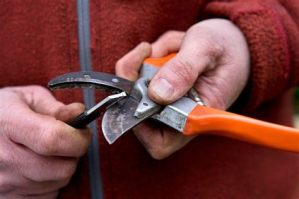 Sharpen your Secateurs! @ Kernel St Andrews Botanic Gardens