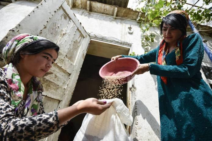 Bønder høster korn i Gisar, Tadsjikistan.