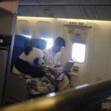 Si el perro se llama lucho... Este panda se llama ¿?