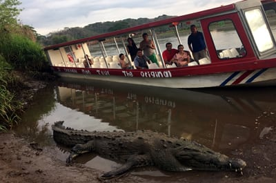 Crocodile Tour