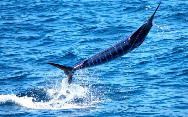 Pesca deportiva en Costa Rica