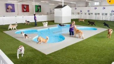 Photo of Aeropuerto JFK crea terminal para animales