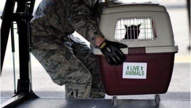 Photo of Lo que debes saber si viajas en avión con tu mascota