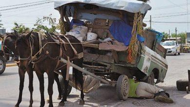 Photo of Explotan a caballos de carga hasta que mueren