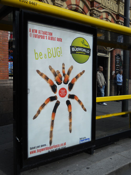 Transport Media - Bug World - Interactive Bus Shelter