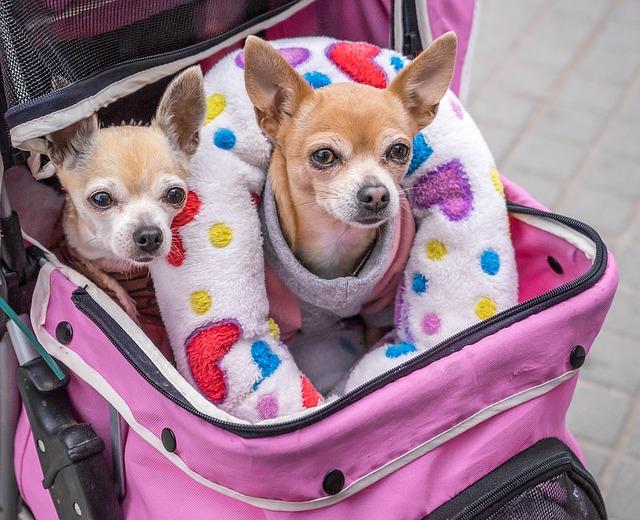 Peut-on emmener un chien avec soi si on prend les transports en commun?